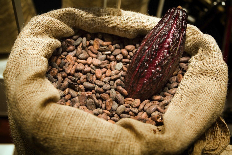 reactive cocoa